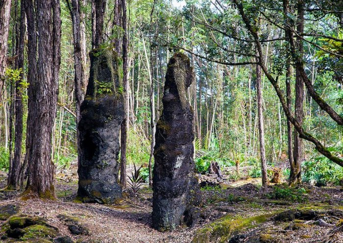 лес лавовых деревьев на гавайях 6 (700x496, 566Kb)