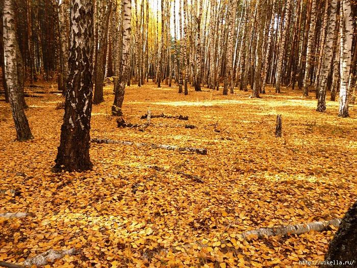 5а мозаика листвы (700x525, 520Kb)