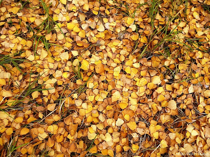 5 мозаика листвы (700x525, 551Kb)