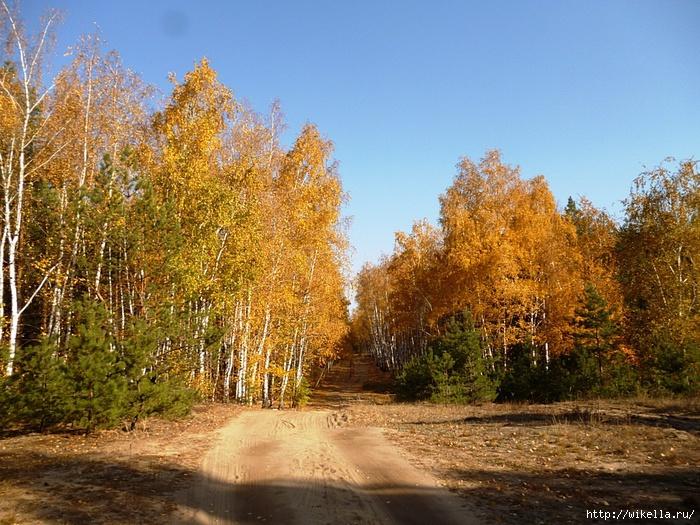 1 лес (700x525, 365Kb)