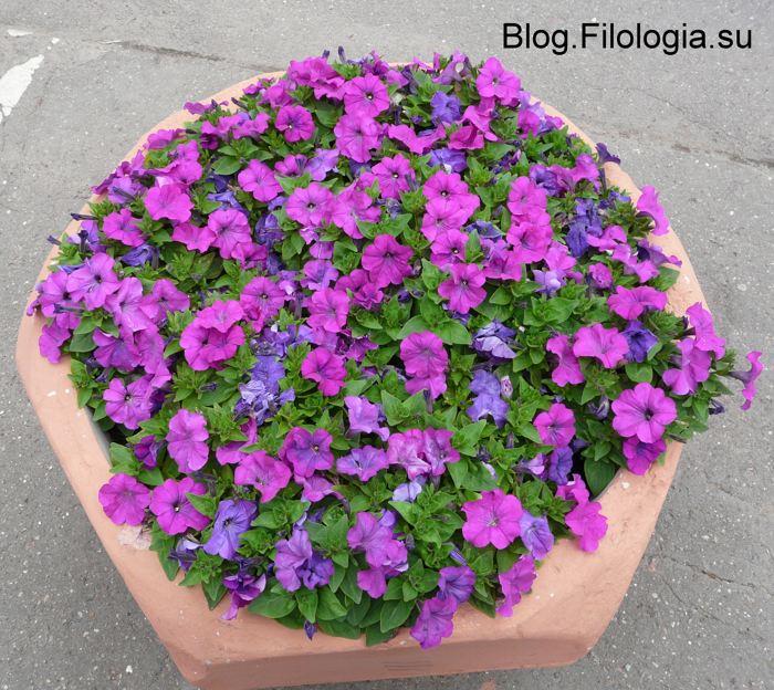 3241858_flowers04 (700x624, 107Kb)