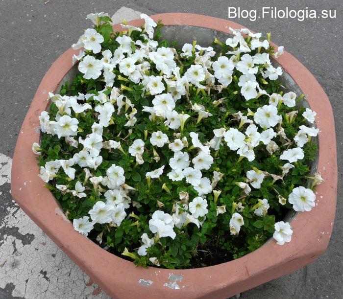 3241858_flowers05 (700x611, 101Kb)