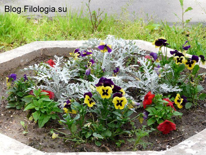 3241858_flowers07 (700x525, 112Kb)