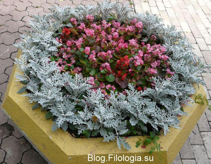 3241858_flowers10 (700x543, 106Kb)
