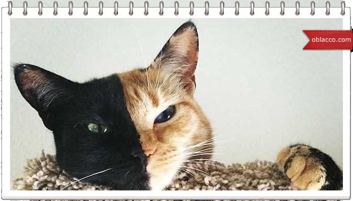 кошка двуликая Венера/3518263_dvylik (700x400, 297Kb)/3518263_dvylik (700x400, 288Kb)