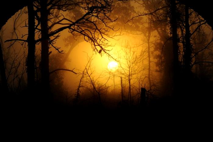 woods-183519_640 (700x465, 378Kb)