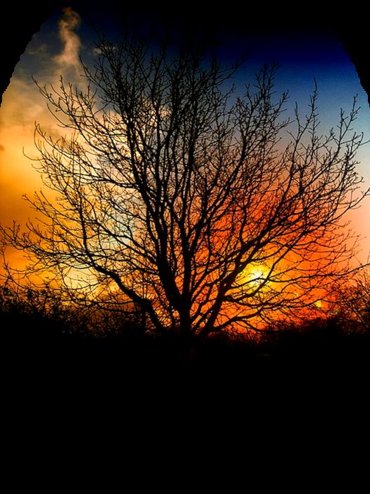 tree-76894_640 (525x700, 596Kb)