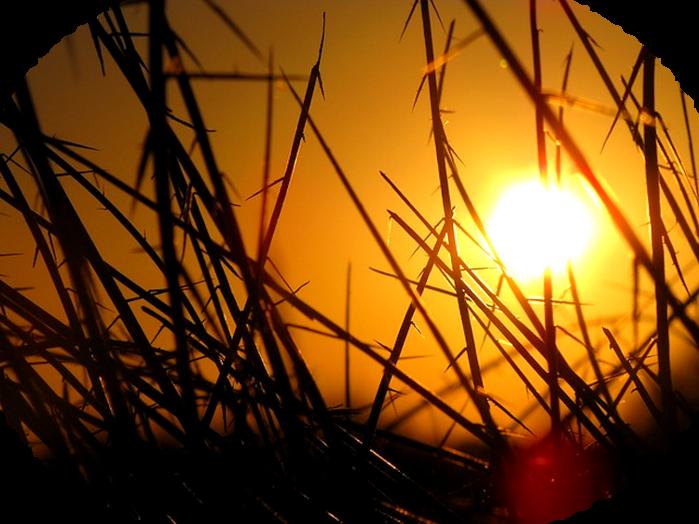 sunset-in-grass-142186_640 (700x524, 524Kb)