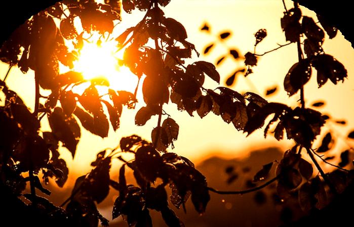 sun-464011_640 (700x449, 467Kb)