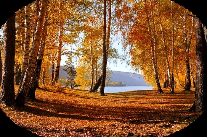 leaves-72908_640 (700x464, 848Kb)