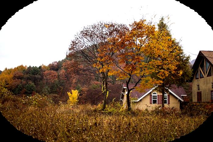 autumn-364144_640 (700x465, 624Kb)