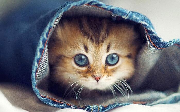 kitties01 (800x537, 81Kb)