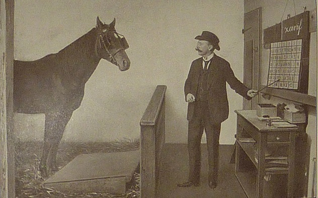 джим кей самая умная лошадь в истории 2 (632x394, 214Kb)