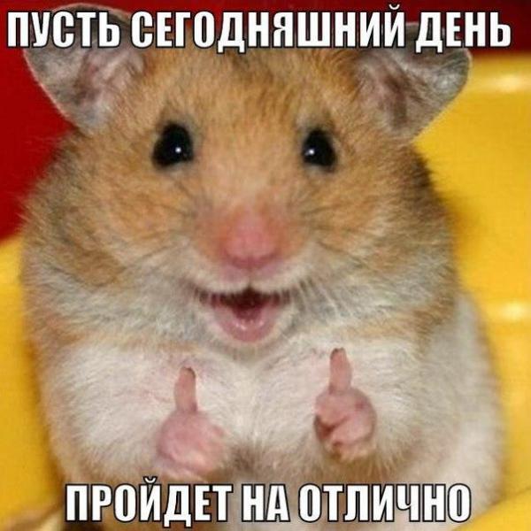 smeshnie_kartinki_141363780535 (600x600, 242Kb)