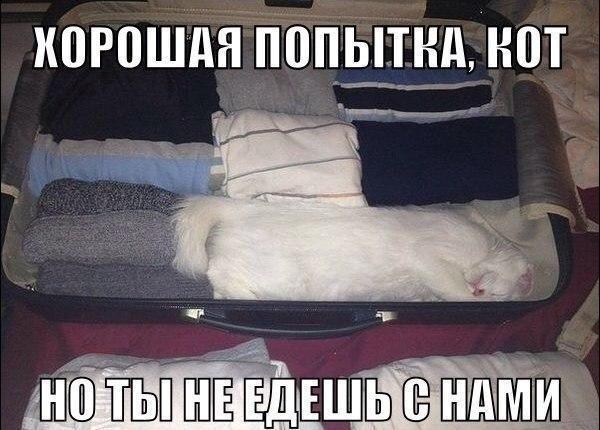 smeshnie_kartinki_141363780556 (600x430, 195Kb)