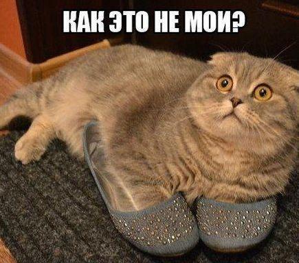 smeshnie_kartinki_141331228489 (435x384, 151Kb)