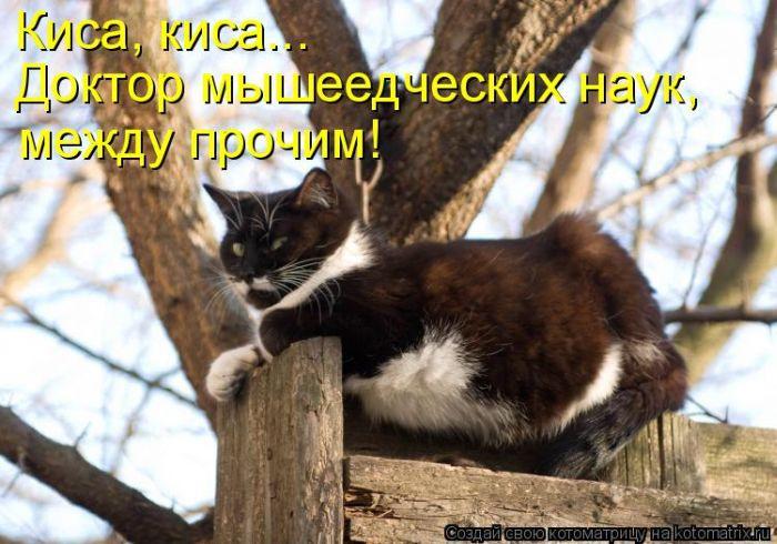 1412534010_33 (700x490, 320Kb)