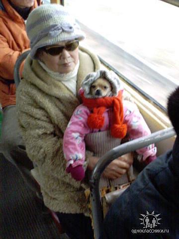 дама с собачкой (360x480, 31Kb)