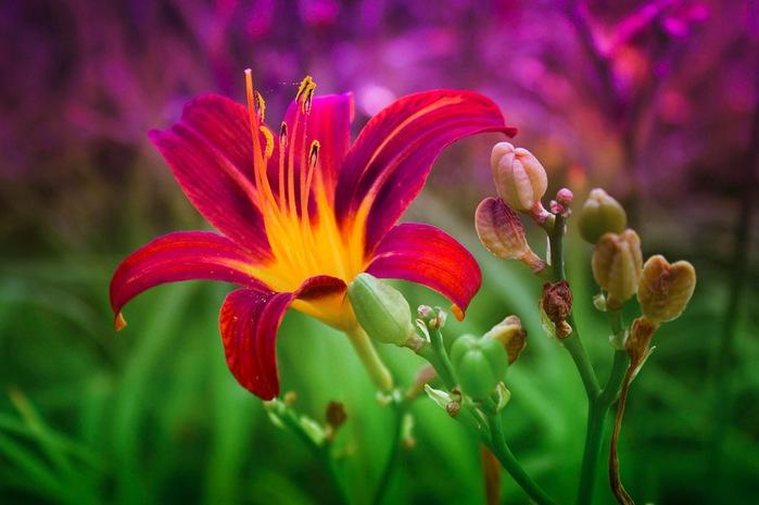 3085196_Most_Beautiful_Flowers_04 (700x465, 104Kb)