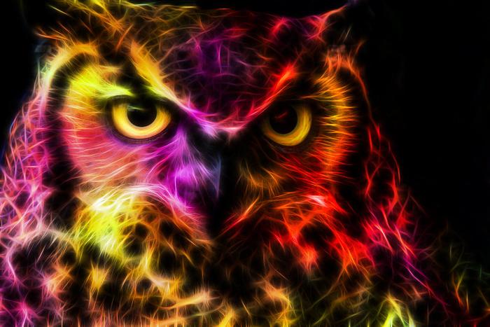 dat_owl_face_doe_by_minimoo64-d7kmiif (1) (700x467, 417Kb)