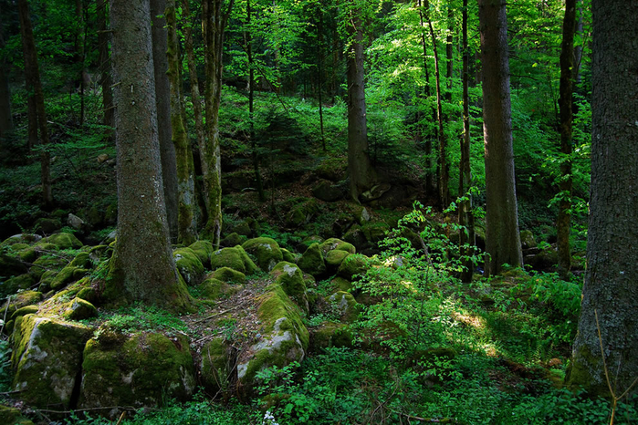Schwarzwald-5-8-11 (700x466, 562Kb)