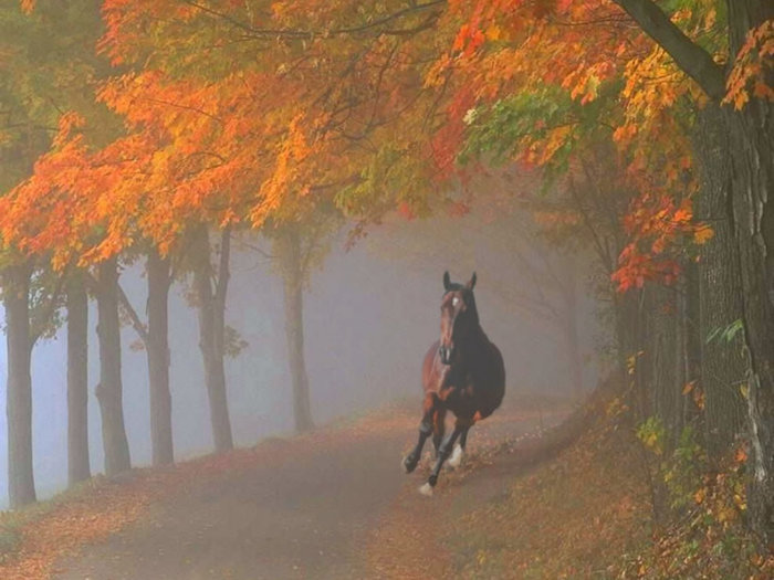 Spooked-horse-galloping-through-foggy-fall-forest (700x525, 81Kb)