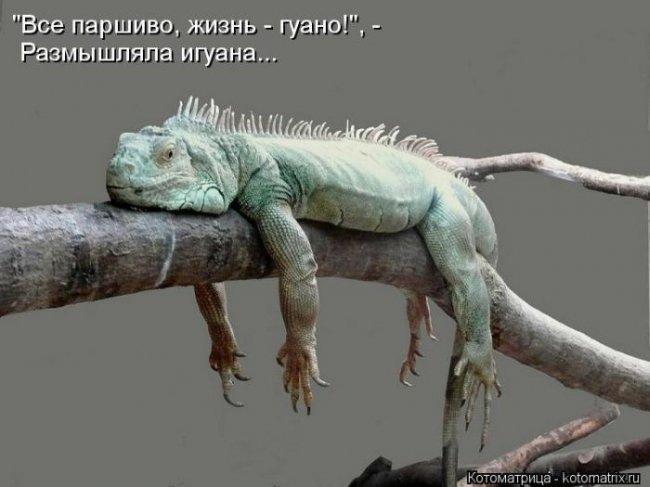 1354032679_lol54.ru_kotomatrix_063 (650x487, 132Kb)