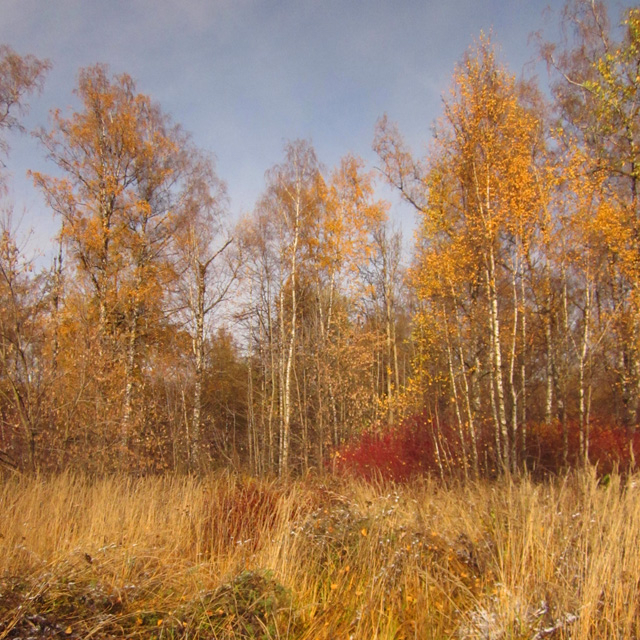 05 Осенний мороз (640x640, 519Kb)