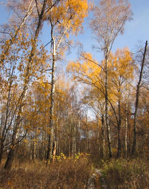 07 Осенний мороз (507x640, 487Kb)