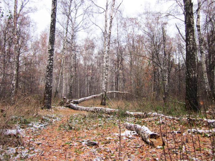 11 Осенний мороз (700x525, 623Kb)