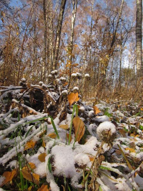 17 Осенний мороз (480x640, 443Kb)
