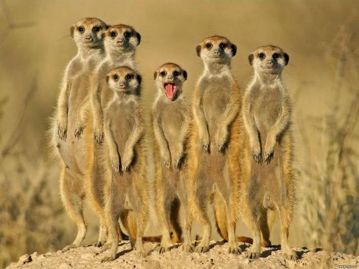 смешные фото животных 1 (700x524, 334Kb)