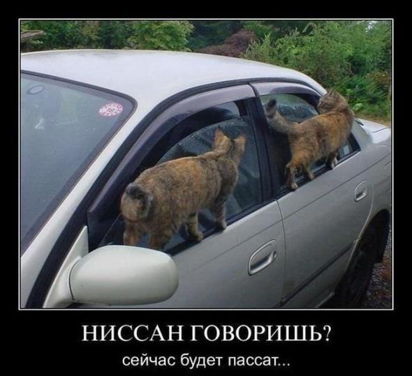 smeshnie_kartinki_141390553617 (590x539, 165Kb)