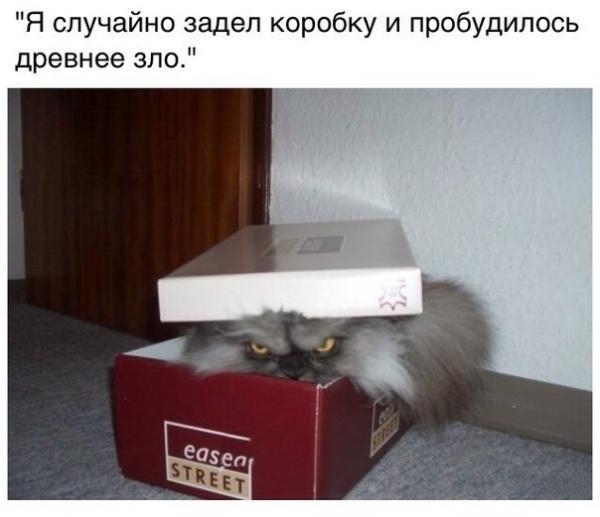 smeshnie_kartinki_141420244066 (600x517, 127Kb)