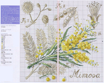 ������ Mimoza-2 (700x559, 372Kb)