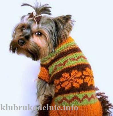 одежда для собак (395x406, 121Kb)