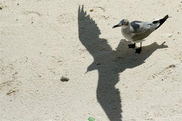 Фотографии странных теней