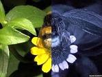 ������ glaza-bees-1 (400x300, 87Kb)