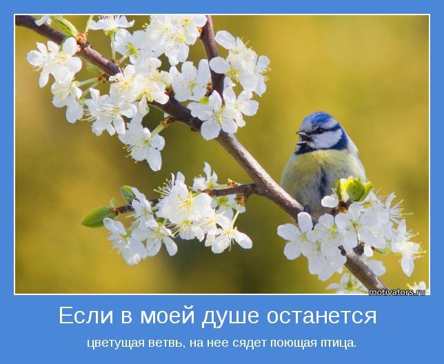 если в моей душе останется цветущая сирень на нее сядет поющая птица (644x528, 47Kb)
