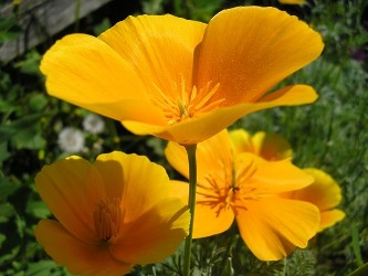 flower (333x250, 27Kb)