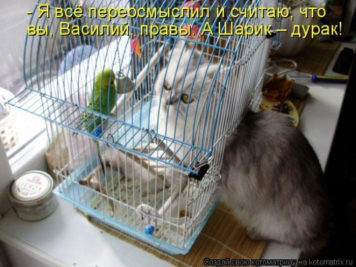 1412530444_5-www.radionetplus.ru (700x525, 203Kb)