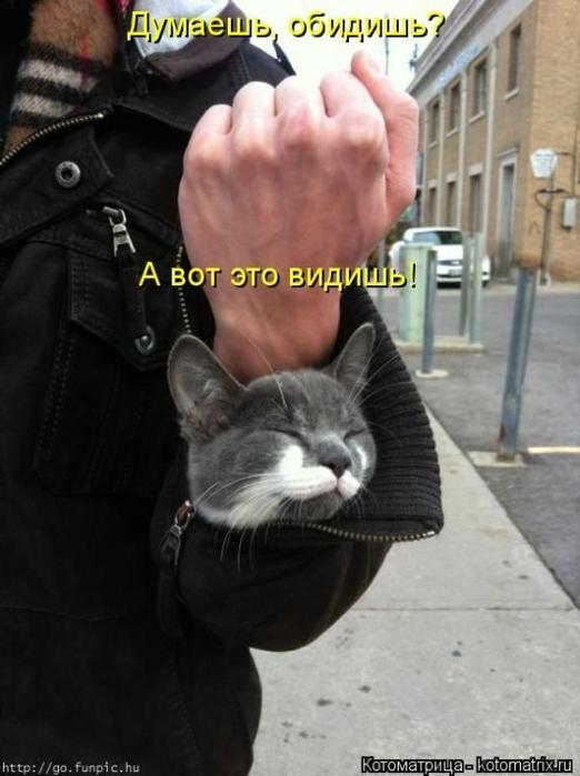1412530477_20-www.radionetplus.ru (522x700, 195Kb)