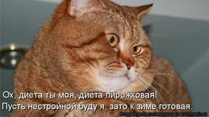 1412530538_3-www.radionetplus.ru (700x391, 133Kb)