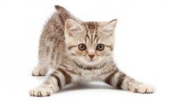 1329835238_your_cat (450x344, 5Kb)