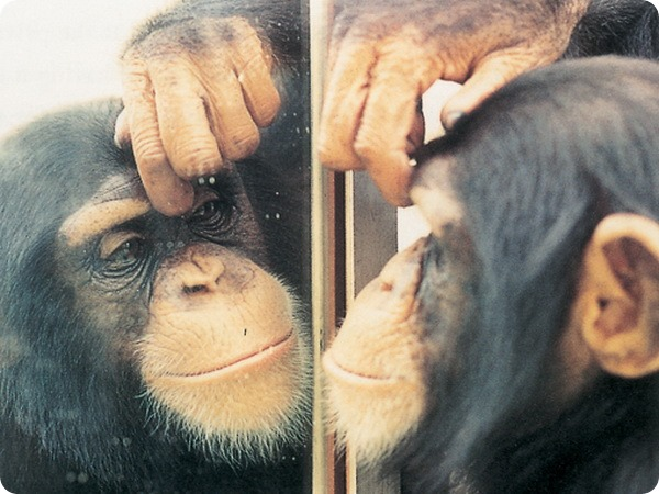 животные-и-зеркало-2 (600x450, 87Kb)
