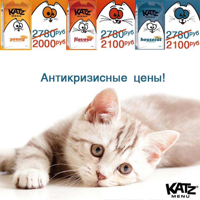 katz (700x700, 325Kb)
