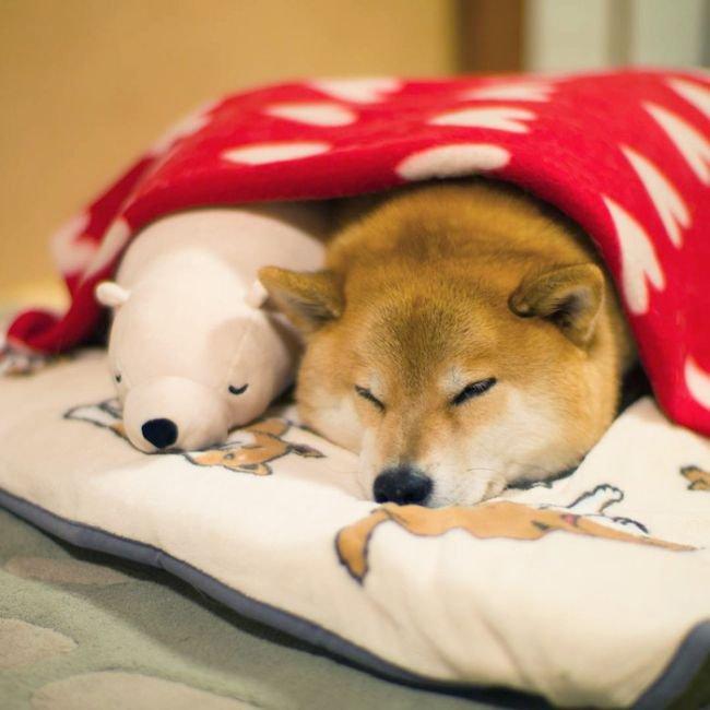 секрет популярности пса Мару