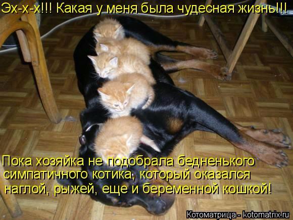 kotomatritsa__ (580x435, 281Kb)
