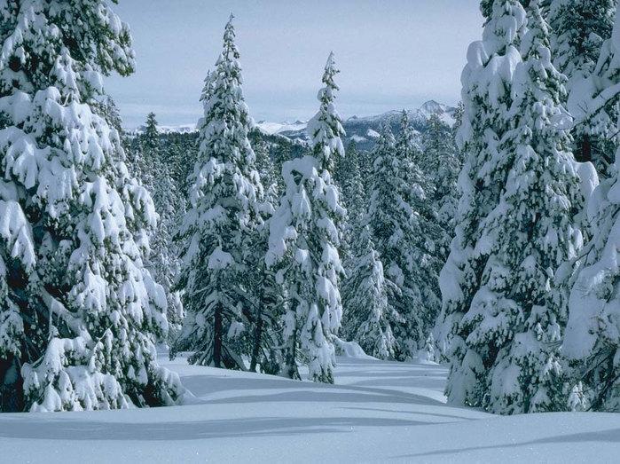 тайга зимой 6 (699x523, 347Kb)