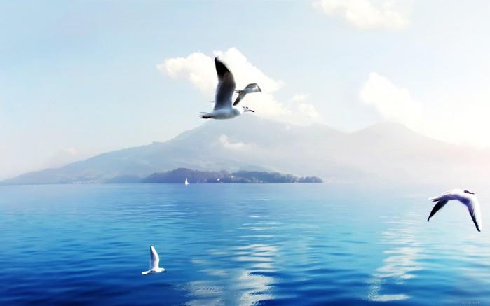 Чайки-над-морем- (700x437, 37Kb)